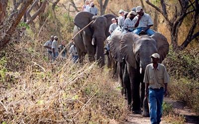 elephant-whispers